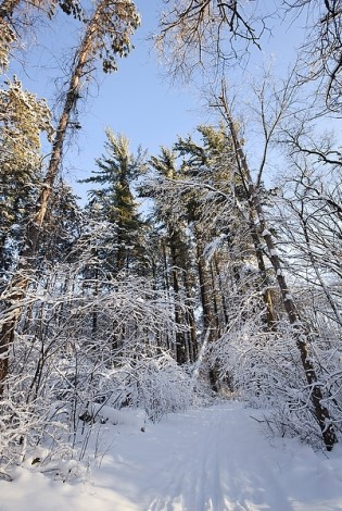 Winter trails (Photo: Jeff Miller/UW–Madison)