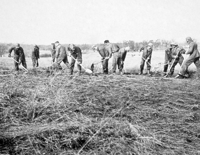 A Civilian Conservation Corps crew in 1935 turns the soil of an old farm field in preparation for a prairie restoration planting.