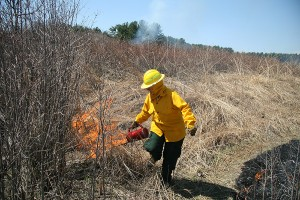 A trained crew member uses a drip torch to start a 2007 prescribed fire. Photo: Bill Muehl