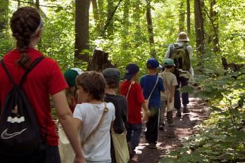 Woodland walk at day camp