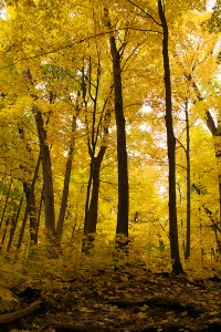 Wingra Woods
