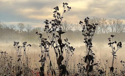 Morning fog in Curtis Prairie