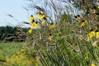 Native wildflowers and grasses bloom in Wisconsin Native Plant Garden