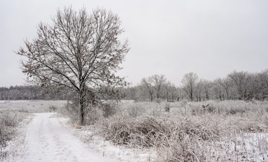 Curtis Prairie after snow