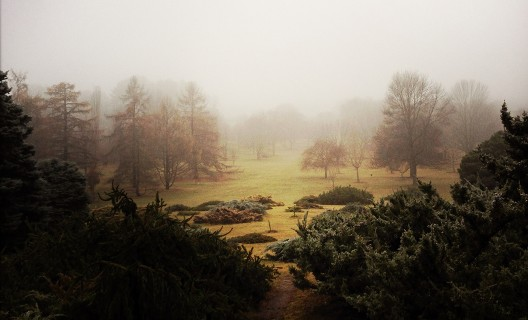 Foggy morning in Longenecker Gardens