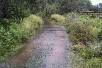 A firelane—and popular foot trail—near Teal Pond Wetlands flooded with runoff after a storm.