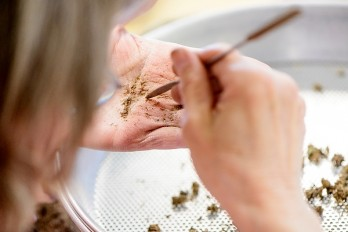 A volunteer sorts prairie seeds collected at the Arboretum for future restoration projects. Photo: Bryce Richter/UW–Madison