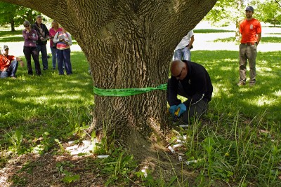Paul Bolan carefully drills the first of 21 injection holes around the base of the ash tree.