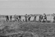 A CCC crew prepares part of what is now Curtis Prairie for planting.