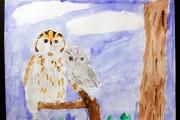 Eastern Screech Owl, by Isabelle.