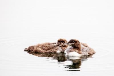Siblings. Photo © Becky McKenzie
