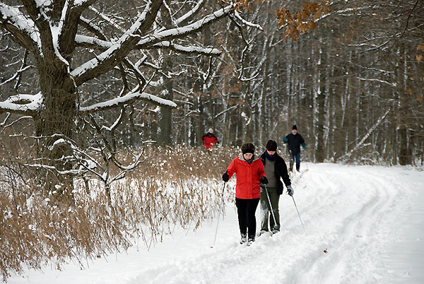Cross-country skiers at the UW–Madison Arboretum (Photo: Jeff Miller/UW Communications)