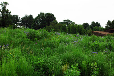 Winter will lose its grip on the mesic prairie garden soon, eventually leading to late spring green scenery. (Photo: Susan Carpenter)
