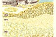 Illustration of Curtis Prairie restoration through history, by Liz Anna Kozik