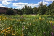 Wisconsin Native Plant Garden in bloom
