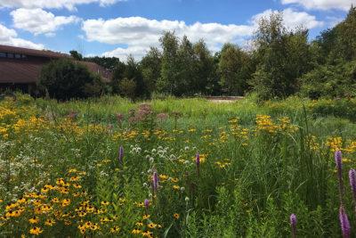 Wisconsin Native Plant Garden in bloom