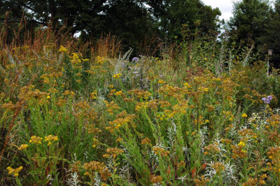 Wisconsin Native Plant Garden in September. (Photo: Susan Carpenter)