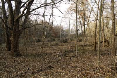 Skunk Cabbage Wetlands clearing
