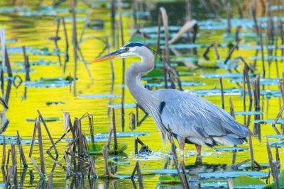 Monet Morning. Photo © Jim Stewart.