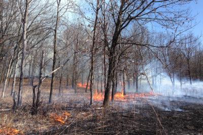 Prescribed fire in Grady Tract oak savanna