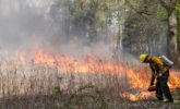 Fire crew burning Curtis Prairie in 2019