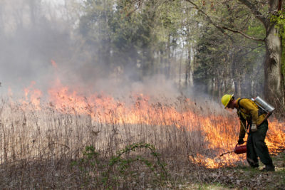 Fire crew burning Curtis Prairie in 2019