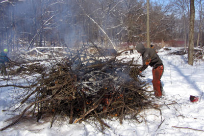 Burning brush piles at Skunk Cabbage Wetlands