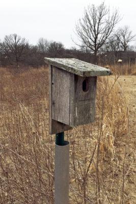 weathered bluebird box