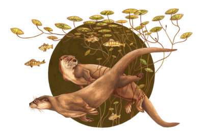 painting of North American river otter, Lontra canadensis, by Rebecca Jabs