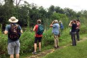 Volunteers use binoculars to search for dragonflies.