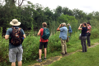 Volunteers use binoculars to search for dragonflies.