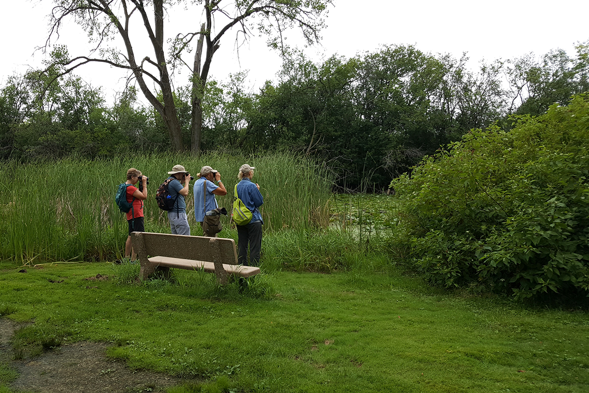 Citizen scientist volunteers scout for dragonflies at Harvey Schmidt Park near the Arboretum in July. Photo: Christy Lowney