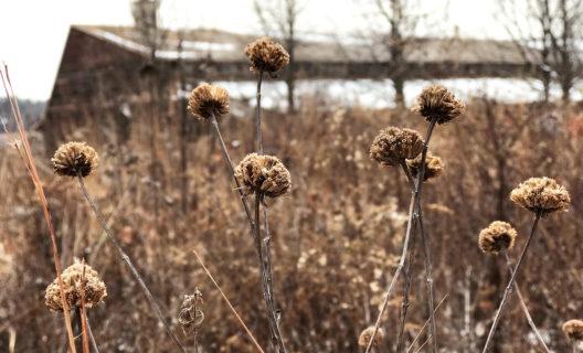 Native Plant Garden in winter