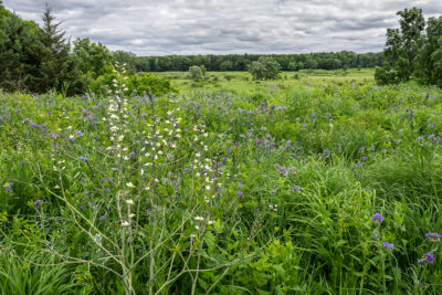 lush growth and blooming wildflowers in Native Plant Garden and Curtis Prairie