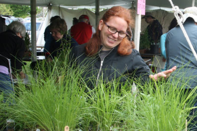 A Native Plant Sale shopper admires pots of prairie grasses