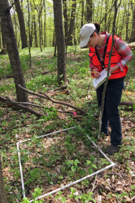 Christy Lowney surveys Abraham's Woods