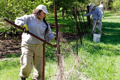 AmeriCorps NCCC Cedar 3 team removing old fence from Longenecker Horticultural Gardens