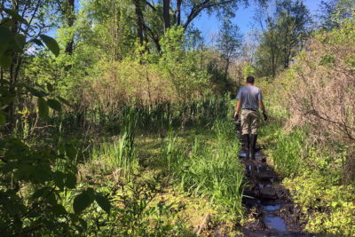 Ho-Nee-Um Pond trail with boardwalk removed