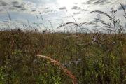 Late blooming prairie grasses and wildflowers.