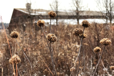 Winter stalks and seedheads in the Native Plant Garden