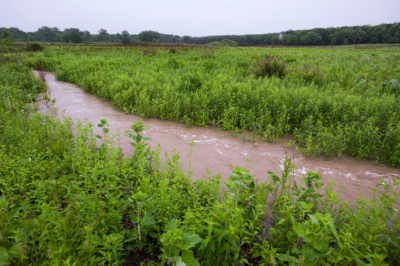 Urban stormwater runoff flows through Curtis Prairie.