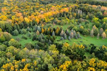 Conifer trees dot Longnecker Gardens in autumn.
