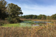 Curtis Pond in late summer