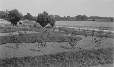 Lilac bed plantings in 1935