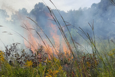 Summer prescribed fire, August 30, 2019