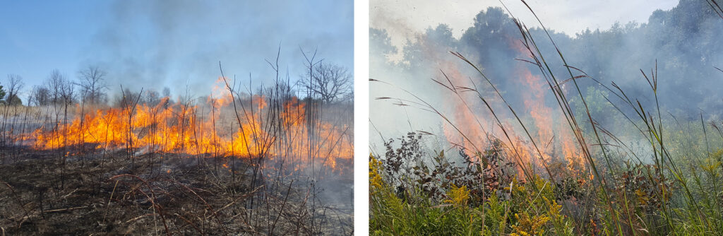Left: spring (dormant season) burn, April 15, 2019. Right: summer (growing season) burn, August 30, 2019.