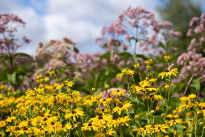 Wisconsin Native Plant Garden blooming in August