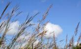 Native Plant Garden grasses