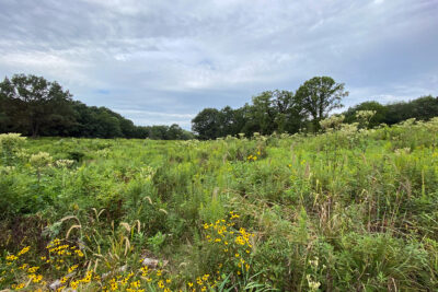 Grady Tract oak savanna restoration