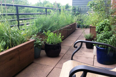 Balcony featuring container native plantings